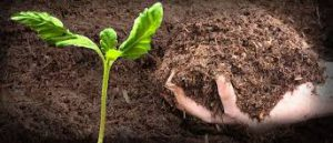 کود آلی کشاورزی
