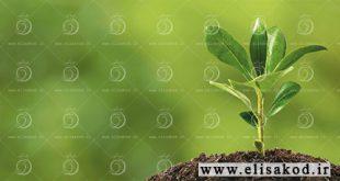 فروش عمده کود ارگانیک ارگانامین با نازلترین قیمت در سراسر ایران