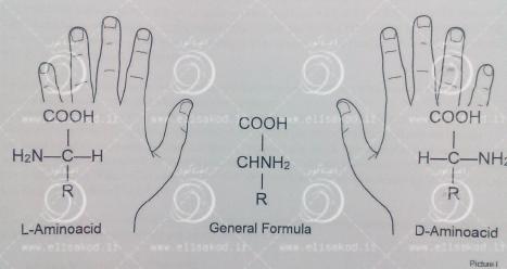 انواع آمینو اسیدها