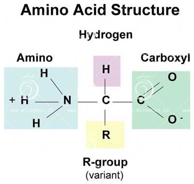 اسید های آمینه